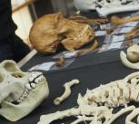 Read more at: Biological Anthropology