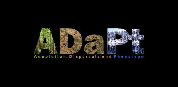 adapt_2.jpg
