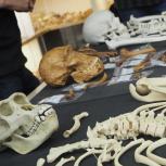 Read more at: Biological Anthropology Seminar Series